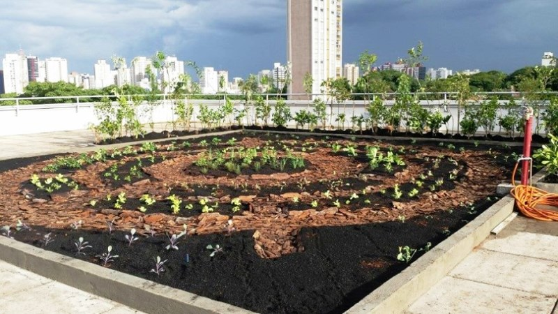 3 iniciativas de sucesso que provam que São Paulo está cada vez mais verde