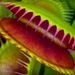 Brasil descobre quase 1 nova espécie de planta por dia