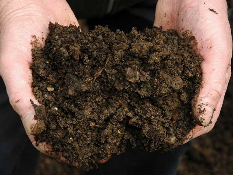 33% dos solos do mundo estão degradados, diz ONU