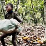 7 fabricantes de chocolate que financiam o trabalho escravo infantil