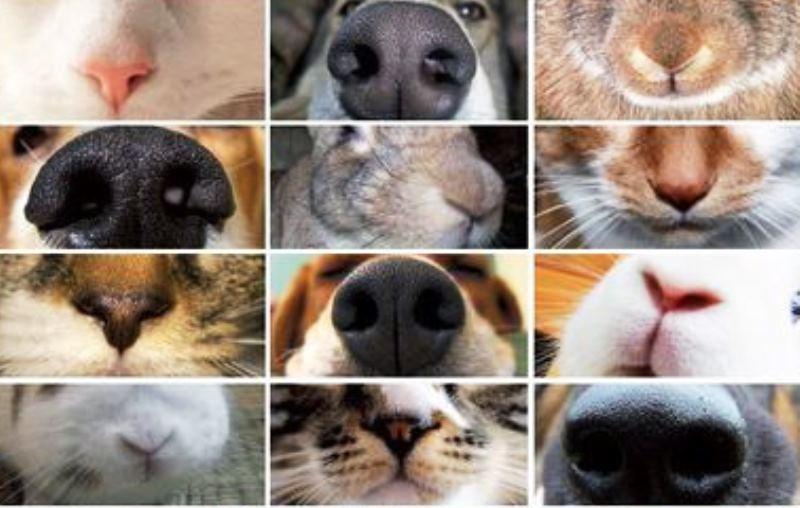 Fumo passivo também faz mal aos animais de estimação (e pode causar até câncer), diz estudo