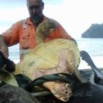O homem que compra tartarugas marinhas para devolvê-las ao mar
