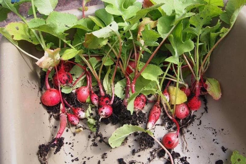 App gratuito para celular ensina a criar hortas em casa