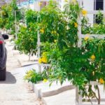 Cidade brasileira promete plantar duas árvores para cada habitante