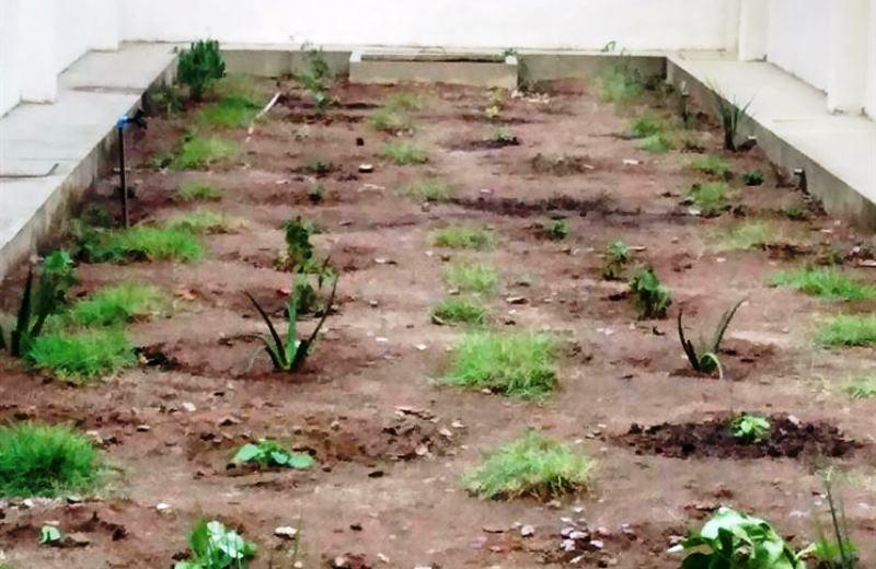 Hospitais da Paraíba ganham hortas onde é possível colher remédios naturais para pacientes