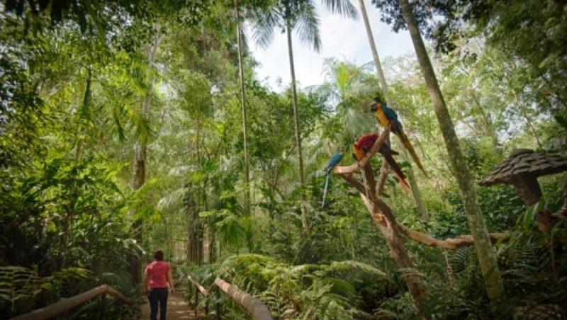 Parque das Aves terá programação especial na Semana pela Sustentabilidade Ibero-Americana