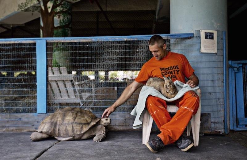 A prisão que mantém uma fazenda com animais vítimas de maus tratos para os presos cuidarem