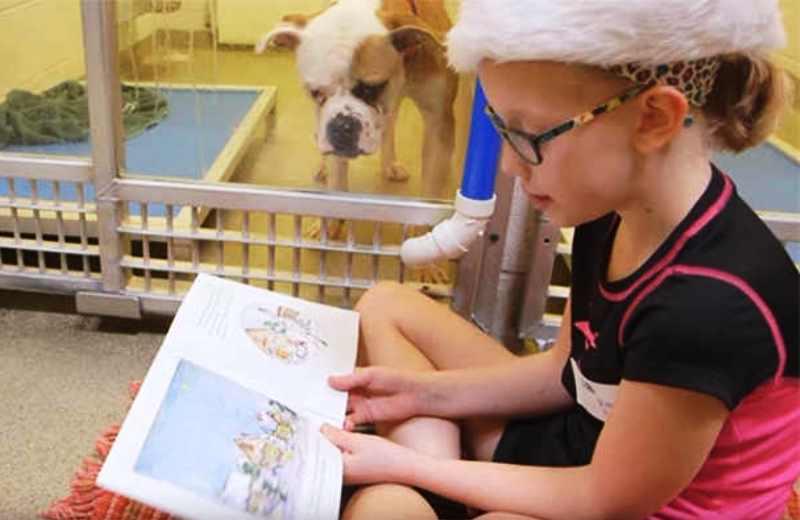 Abrigo convida crianças em alfabetização a ler para cachorros abandonados