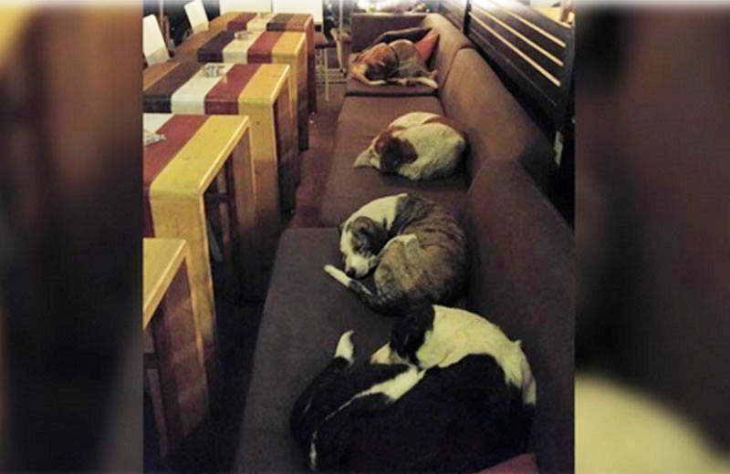 O restaurante que abriga animais de rua durante a noite para protegê-los do frio