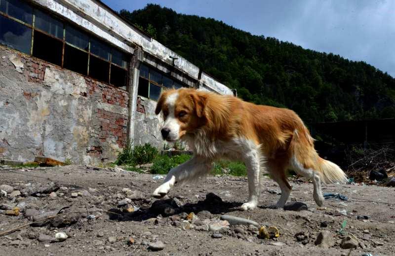 Holanda é primeiro país do mundo a não ter cães abandonados nas ruas