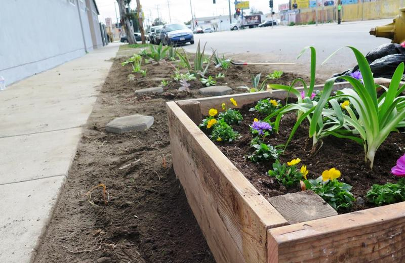 Los Angeles libera calçadas para cidadãos cultivarem hortas e jardins