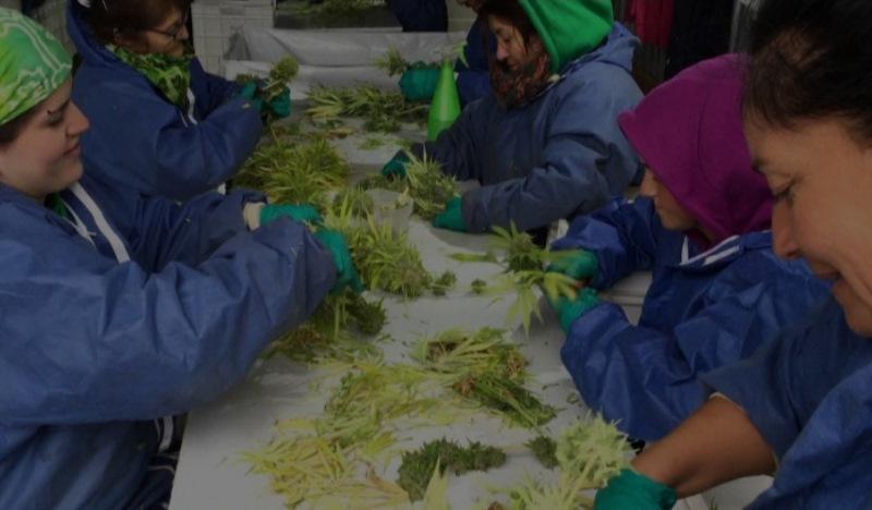 ONG capacita mulheres (de graça!) para produzir remédios naturais à base de maconha em casa