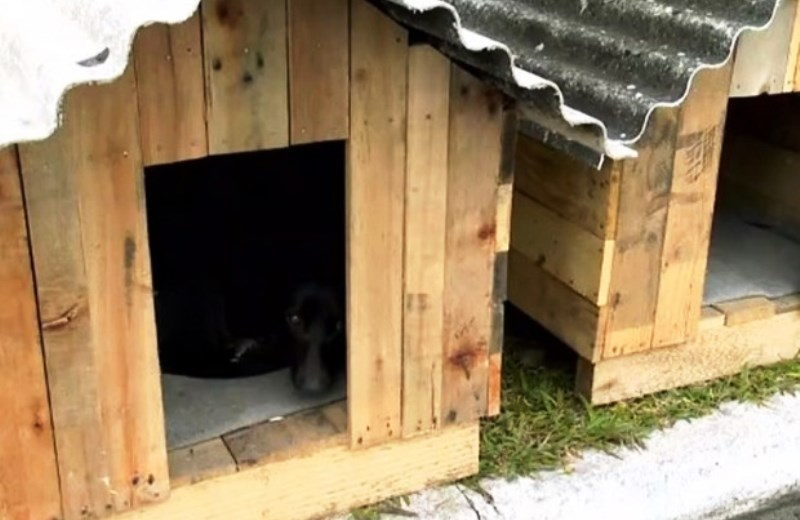 Presos confeccionam casinhas para proteger animais de rua do frio (e ganham redução de pena)