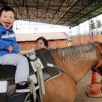 Terapia com cavalos para pessoas deficientes recebe investimento via venda de livros