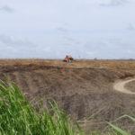 Melhor ou pior que combustível fóssil? Pesquisadores divergem sobre biocombustíveis