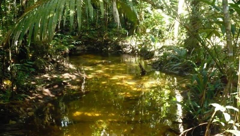 Jatos de água vertical, rios voadores e muitos mais! Confira 5 segredos da Amazônia que o mundo desconhece