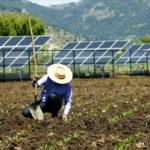 Alimentos orgânicos e produzidos com energia solar! Cooperativas do PR participam de projeto-piloto