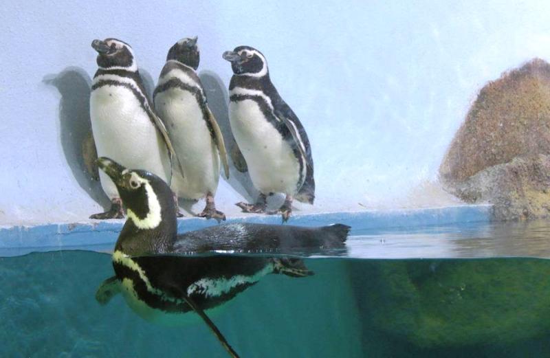 Um dos maiores do Brasil, Aquário do Paranaguá se dedica à educação ambiental