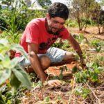 Brasília implementa horta pública para moradores de rua cultivarem alimentos e ervas medicinais