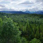 Conheça o primeiro país do mundo a proibir o desmatamento
