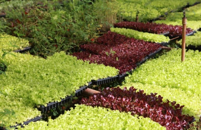 Líder mundial no uso de agrotóxicos, Brasil aumentou utilização de defensivos agrícolas em 190% em 10 anos
