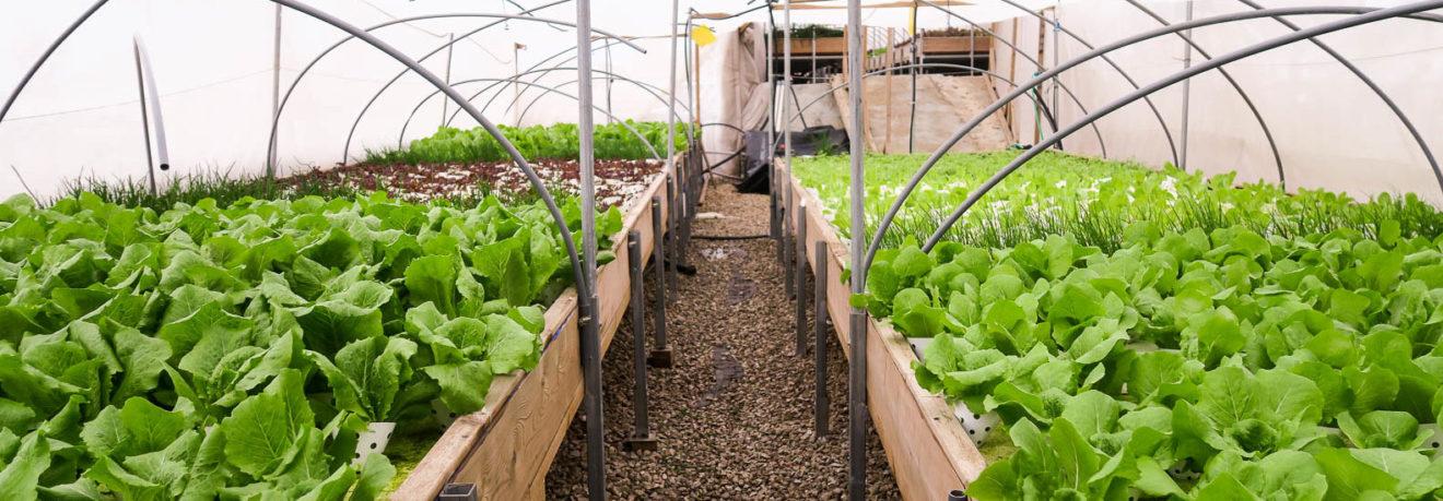 Israel cultiva fazenda orgânica no terraço do shopping mais antigo do país