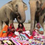 Mulheres de vilarejo indiano tricotam roupas para proteger elefantes locais do frio