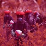 Brasil pode ganhar Política Nacional de Redução de Agrotóxicos