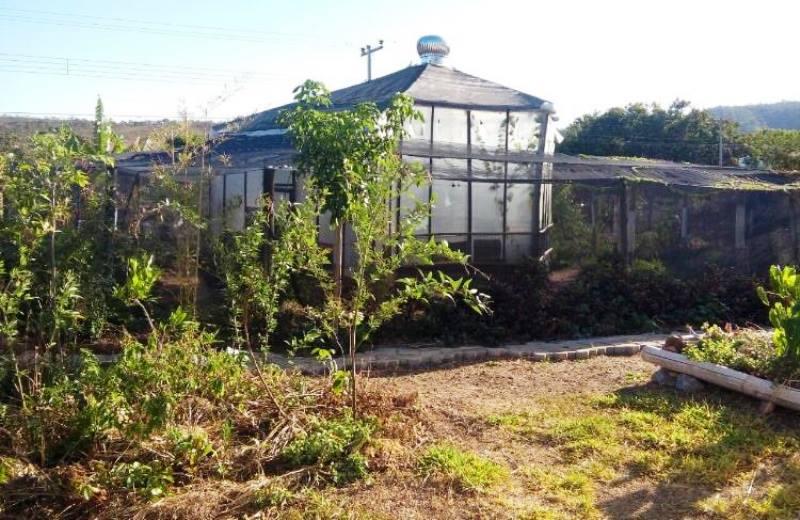 Cidade da Chapada dos Veadeiros mantém horta medicinal comunitária que oferece remédios naturais DE GRAÇA à população
