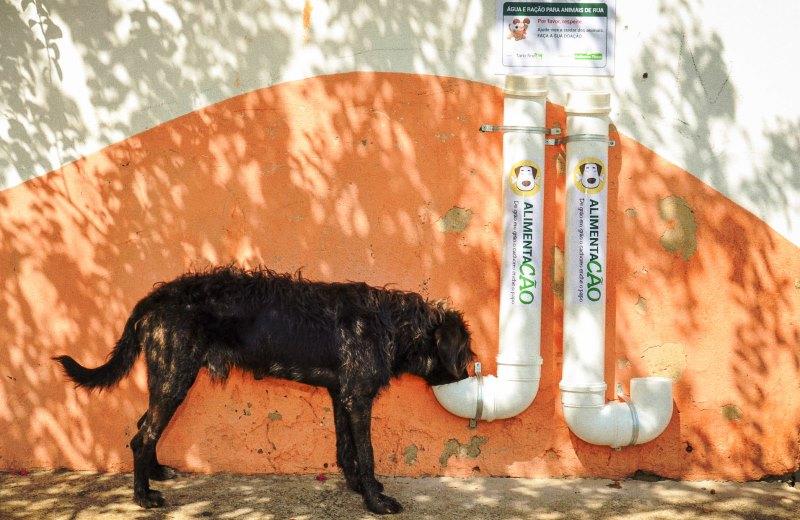 Cidade do interior de SP produz comedouros com canos de PVC para alimentar animais de rua