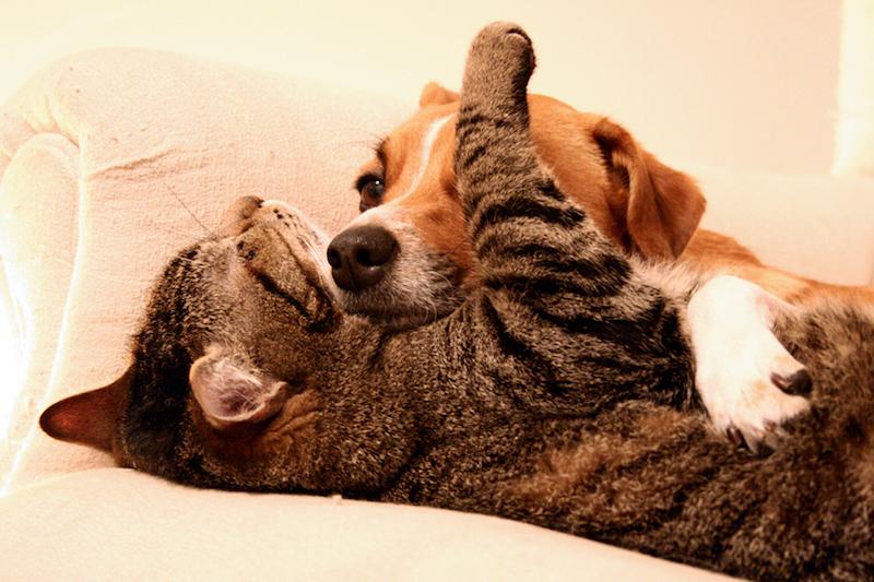 Taiwan é primeiro país da Ásia a proibir o consumo de carne de cães e gatos