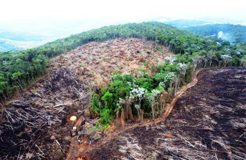 Reflorestar todo o território brasileiro atualmente desmatado custaria R$ 3,7 bi por ano