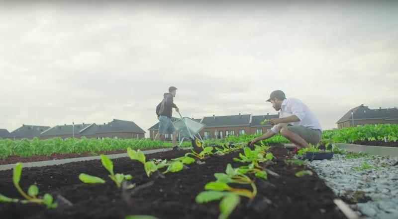 O supermercado canadense que vende alimentos produzidos em horta que fica no seu telhado