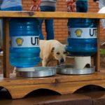Universidade do PR desenvolve alimentador para cães de rua e instala em frente ao campus