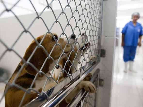 Virou lei! Rio de Janeiro (finalmente!) proíbe testes em animais