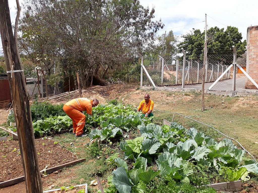 Funcionários públicos de BH agora têm horta orgânica no trabalho