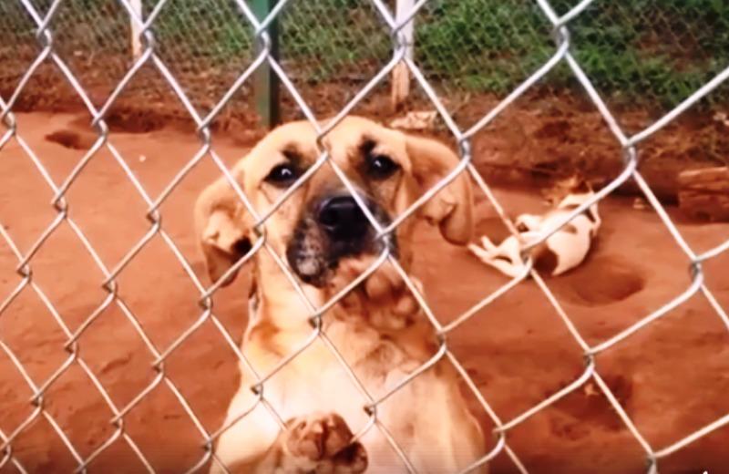 Lanchonete de beira de estrada cria canil para abrigar cães abandonados na rodovia
