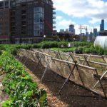 Estudo feito com Google Earth aponta: agricultura urbana é a saída para alimentar superpopulação das cidades