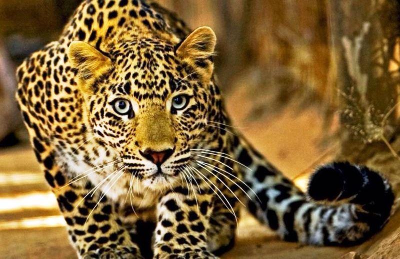 Bancada ruralista quer aprovar PL que libera caça no Brasil (inclusive em unidades de conservação!)