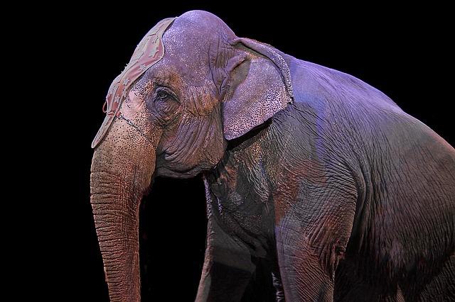 Nova Jersey é o primeiro estado dos EUA a banir animais selvagens dos circos