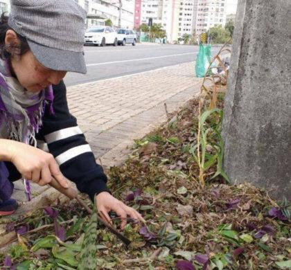 Curitiba libera cultivo de hortas nas calçadas e vai regulamentar a prática