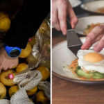 Iniciativa transforma alimentos que iriam para o lixo em pratos de alta gastronomia