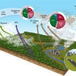 Poluição de Manaus aumenta em até 400% a formação de aerossóis pela floresta amazônica