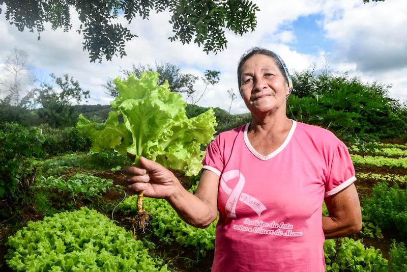 Rede norte-americana de lanchonetes estuda adquirir produtos da agricultura familiar baiana