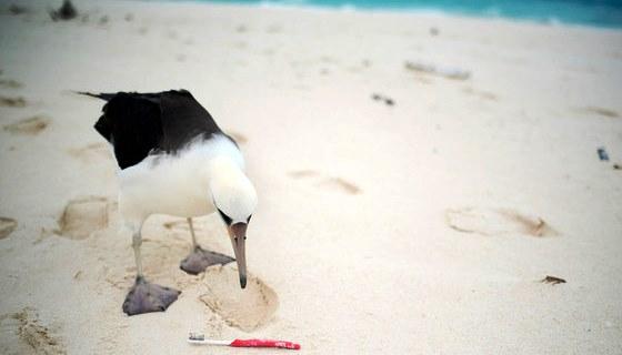 90% das aves marinhas do mundo têm lixo plástico em seus organismos, alerta ONU