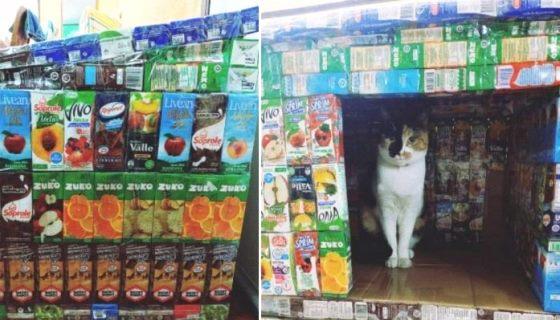 Crianças reciclam caixas de suco para construir casinhas para cães e gatos de rua