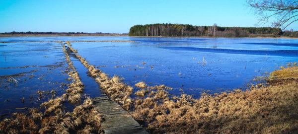 Dia Mundial da Água: recursos hídricos são essenciais para a solução da mudança climática