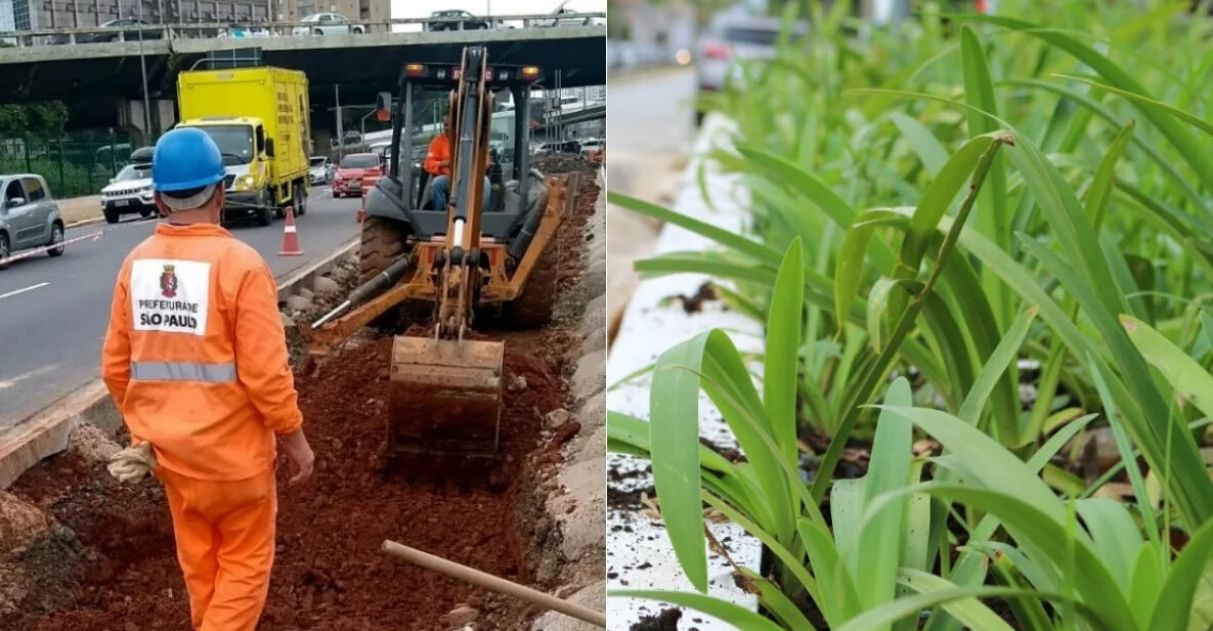 SP terá 20 mil metros de 'jardins de chuva' para combater enchentes