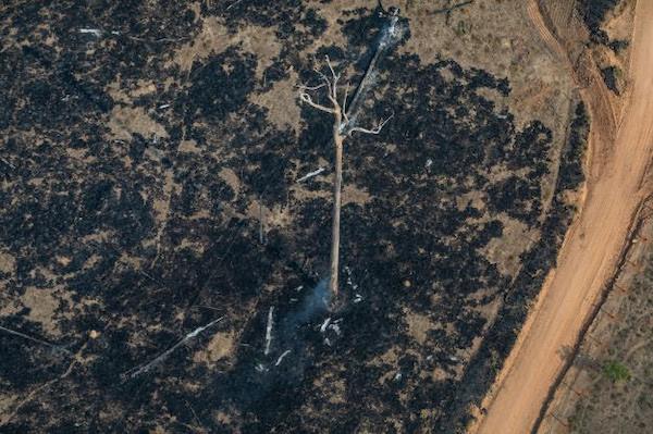 Destruição florestal segue níveis alarmantes em meio a pandemia
