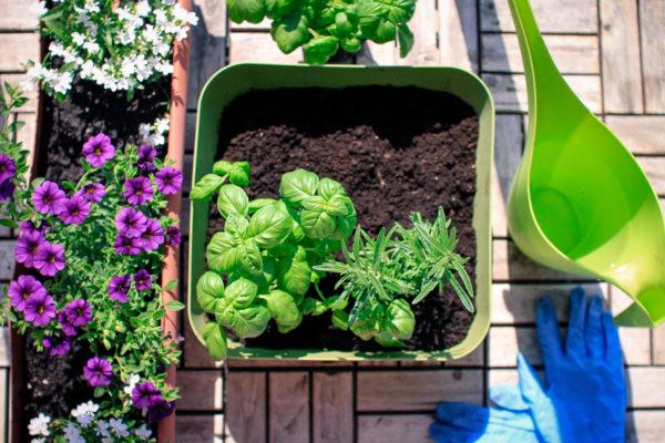 Consultor de sementes online ajuda você a começar sua horta nessa quarentena